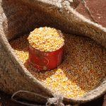 corn at the weekly market